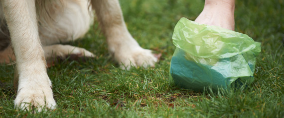 Pet Dog Poop Bag