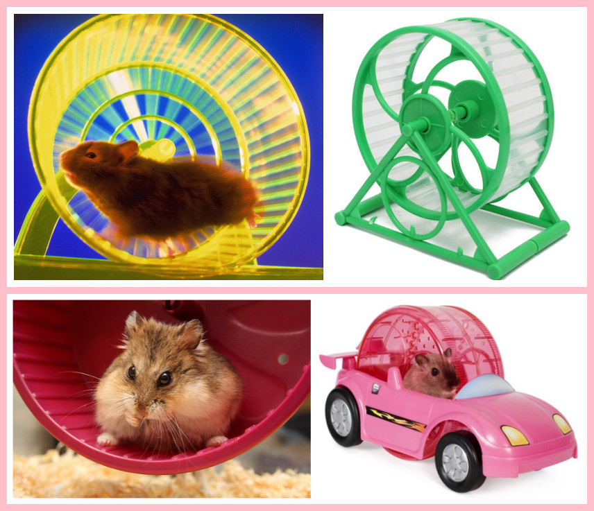 Pet Hamsters Running Wheel