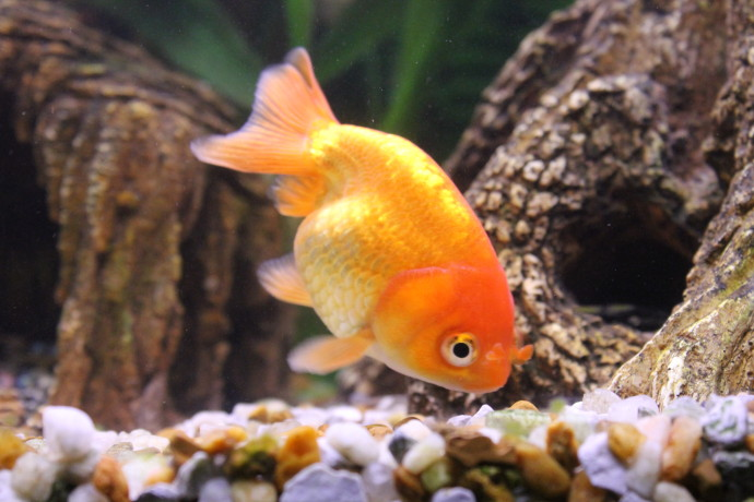 Let your fish aquarium own its professional design for Cute freshwater fish