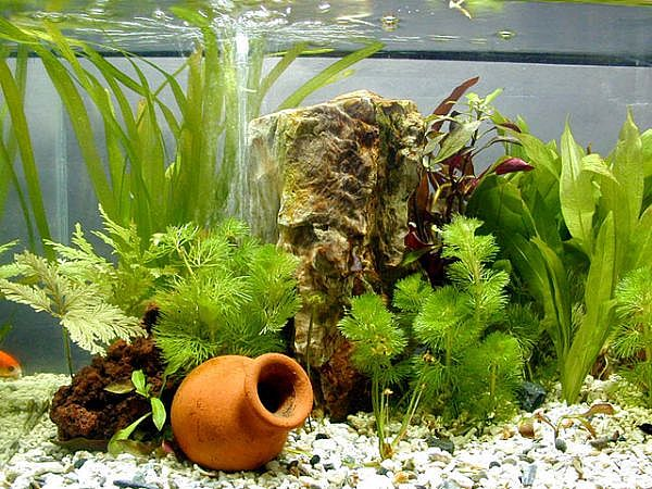 Cheap aquarium decorations