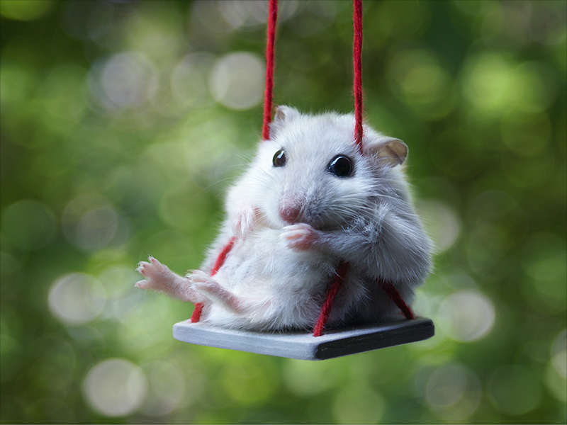 Hahamster Crane Climbing Toy