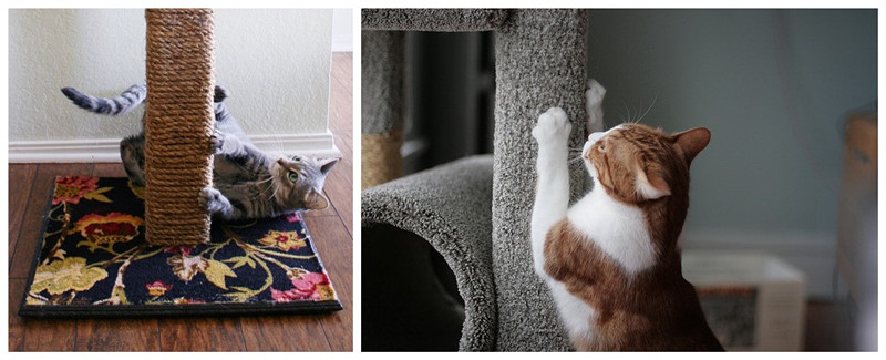 how to stop a cat scratching furniture cat training and