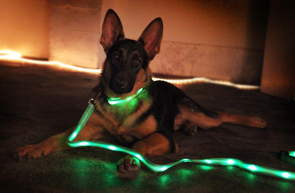 Led Dog Collar And Lead