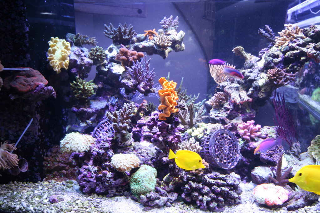 How to keep your aquarium clean wishforpets for How often should you clean a fish tank