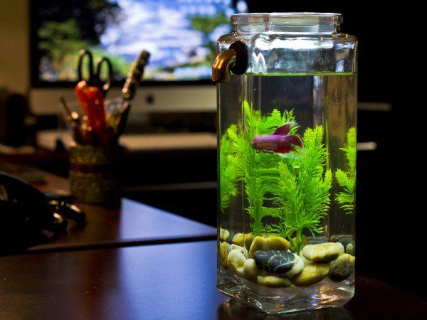 Decorate your fish tank better wishforpets for How to keep fish tank clean without changing water