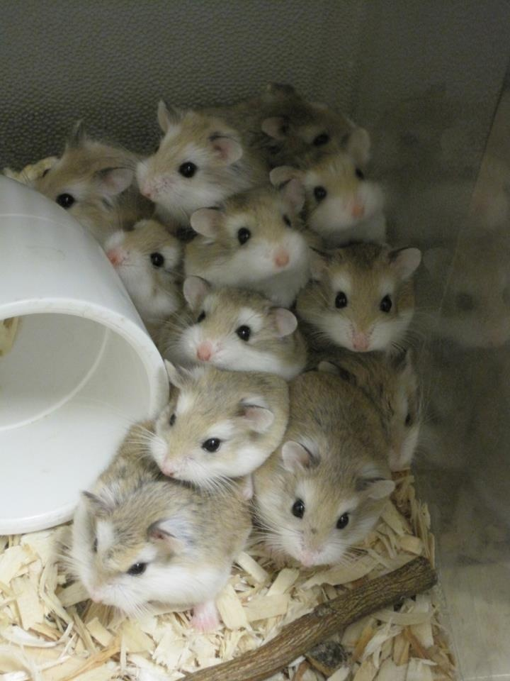 Hamster Ice Cooler Floor