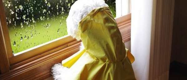 Waterproof pet hoodie raincoat