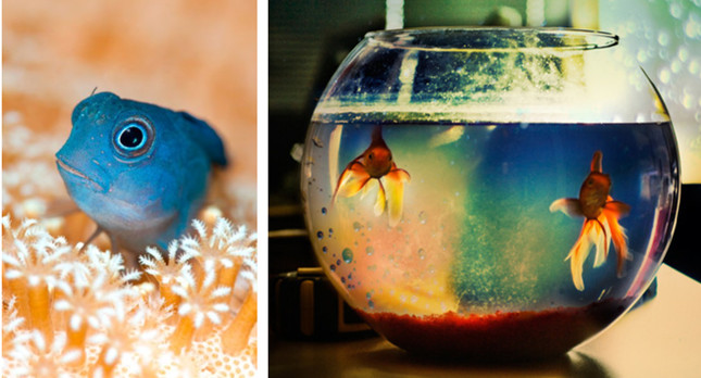 fish tank decorations - Christmas Aquarium Decorations