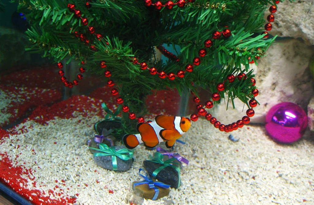 Christmas fish aquarium decorate ideas wishforpets - Fish tank christmas decorations ...