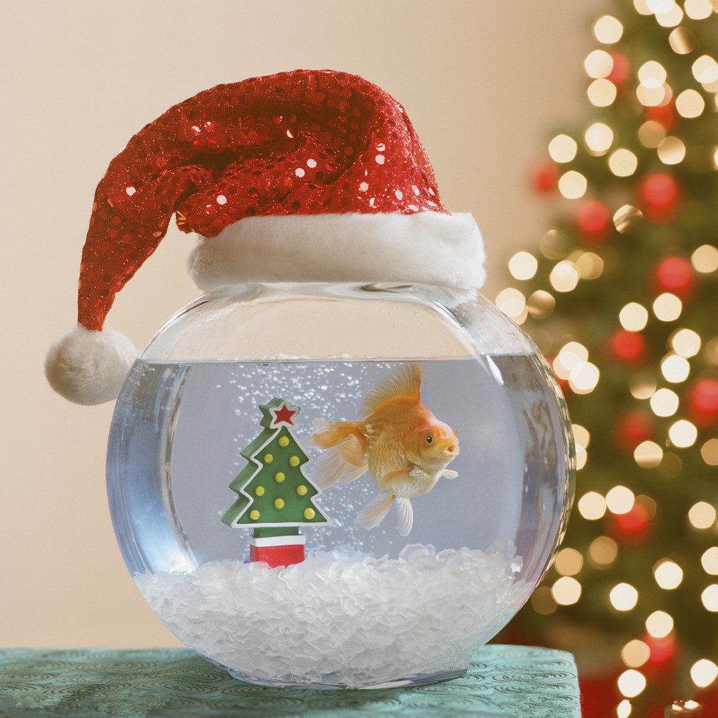 Funny Fish Tank Decorations Christmas Fish Aquarium Decorate Ideas Wishforpets