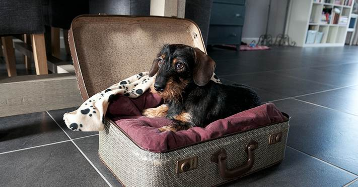 Pashm Cozy Pet Bed