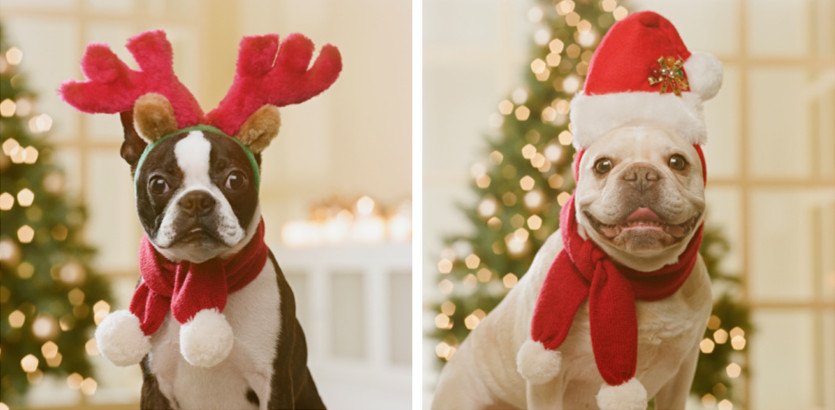 dog Christmas scarf