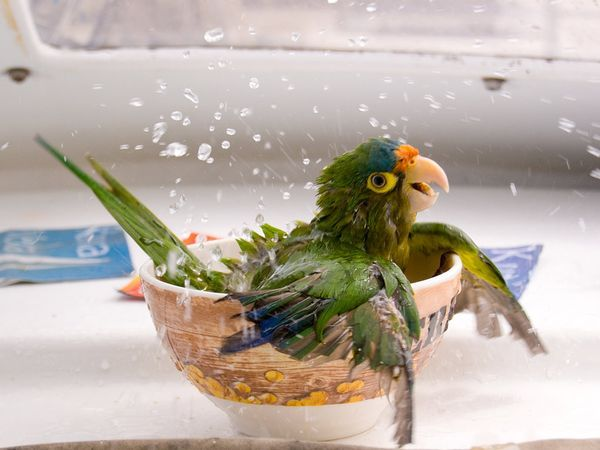 bird bathtub