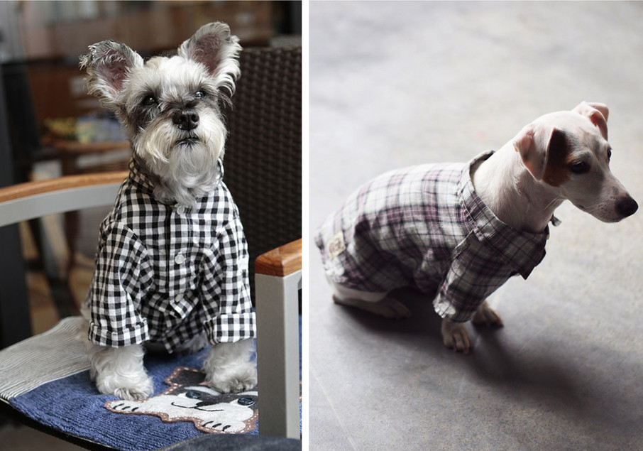 dog plaid T-shirt