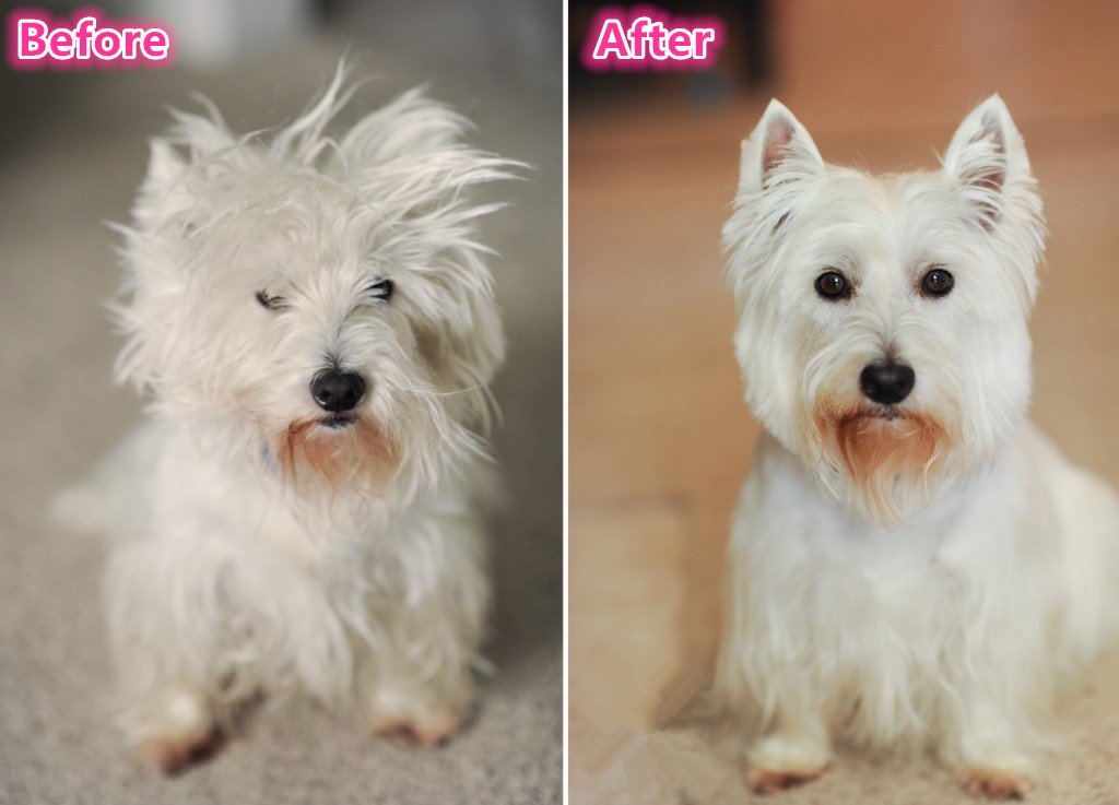 How To Have Your Dog Hair Cut At Home Wishforpets