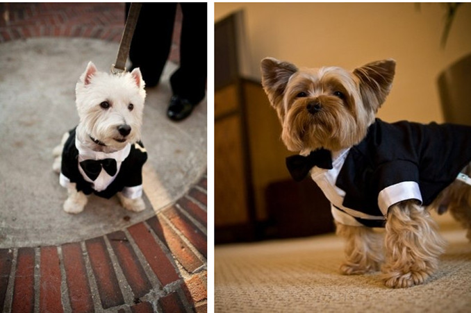 Dog Suits | Dress The Dog - clothes for your pets!