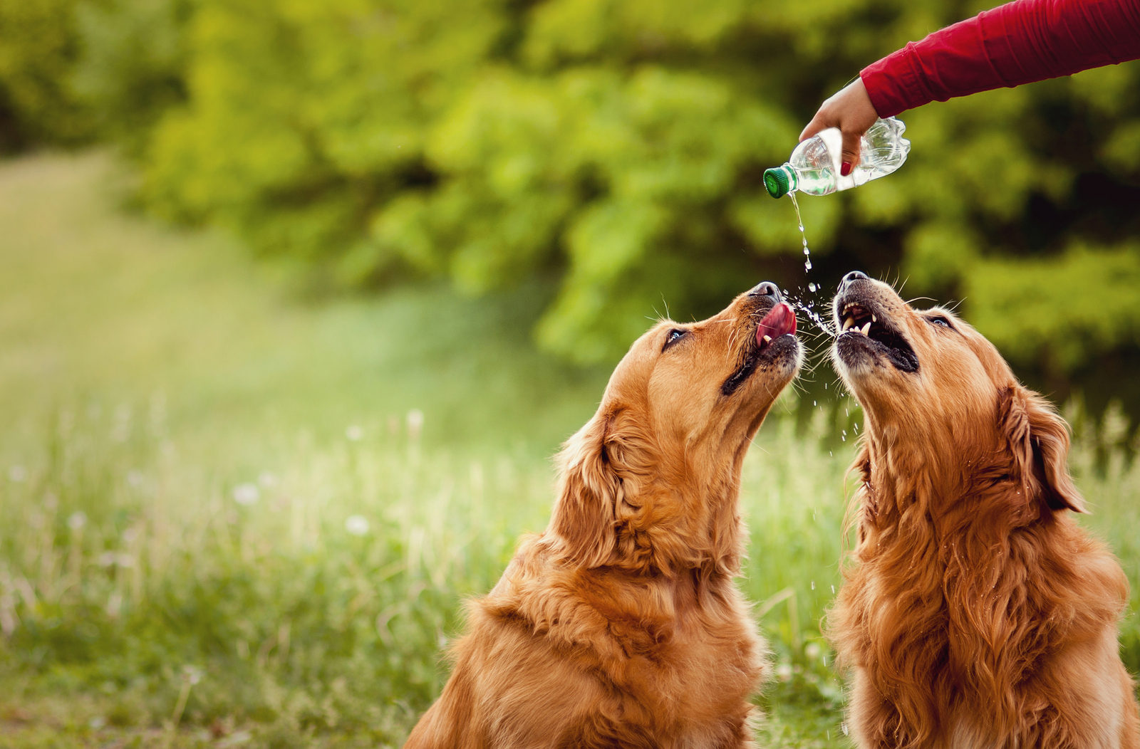 What To Do To Make Your Dog Drink