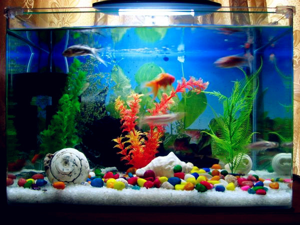 Fish care how to care your fish in spring wishforpets for Aquarium wood decoration