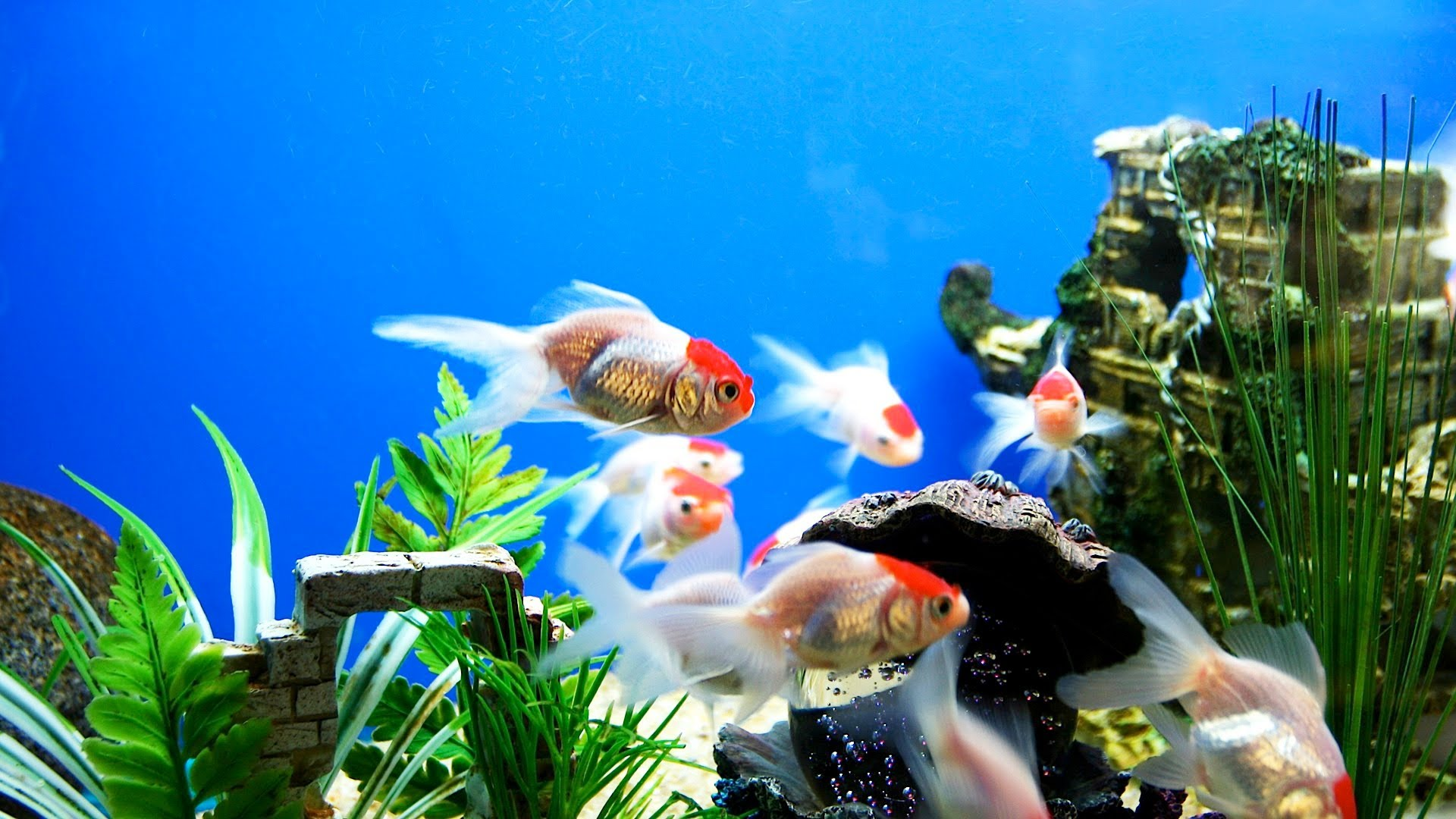 Spring cleaning tips for your fish aquarium wishforpets for How to keep fish tank clean without changing water