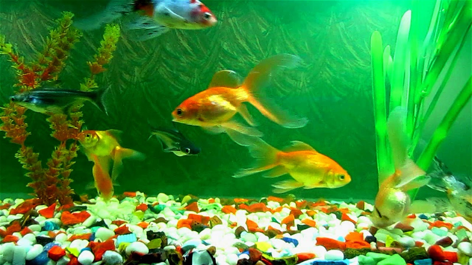 Spring cleaning tips for your fish aquarium wishforpets for Live to fish