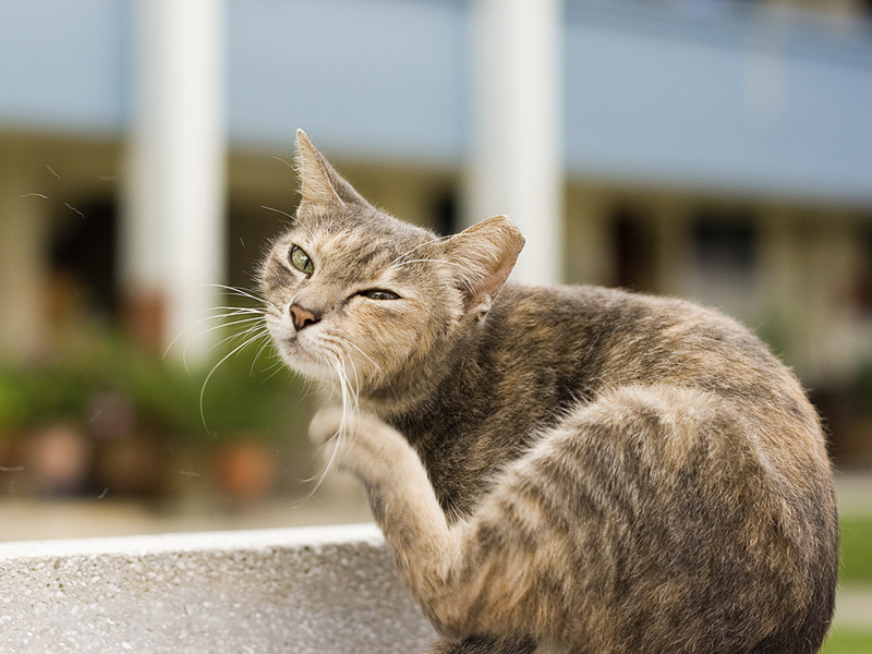 pests for cats