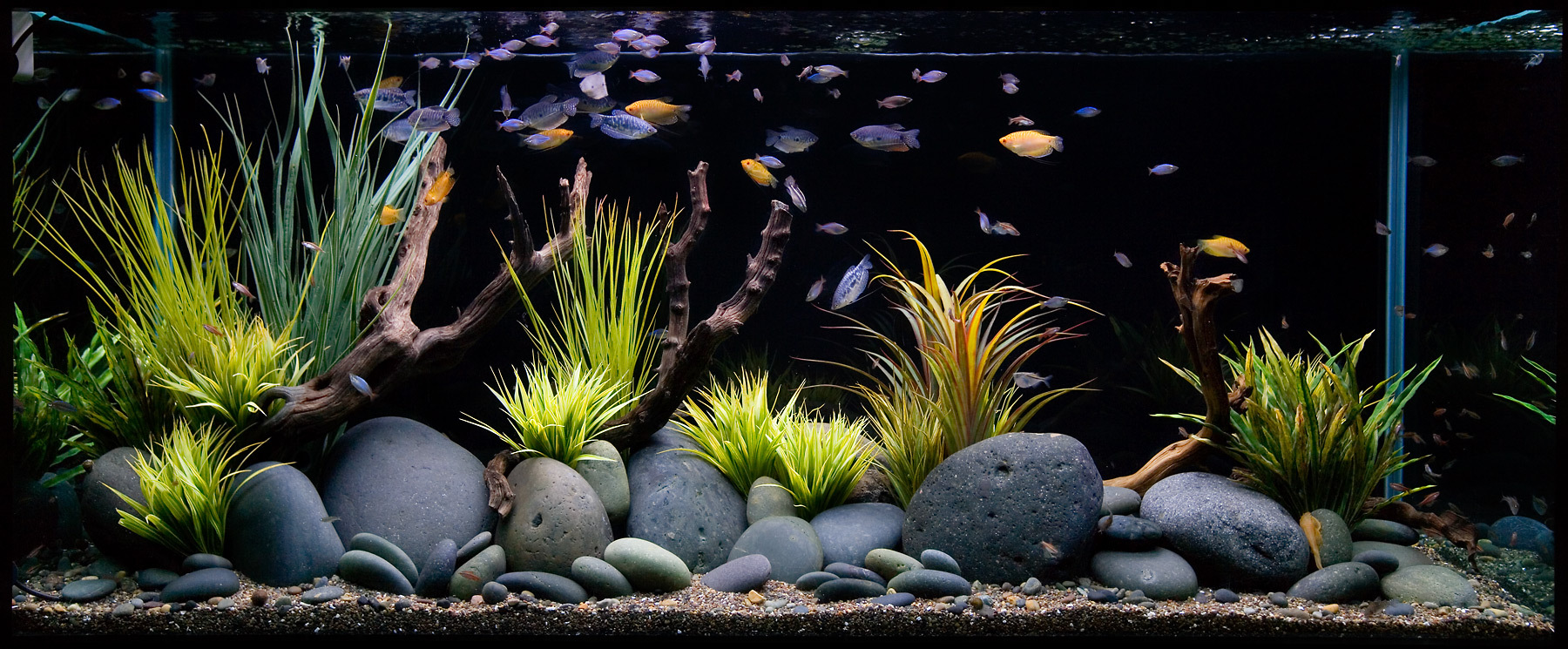 How to set up a fresh water aquarium wishforpets for Aquarium decoration ideas freshwater