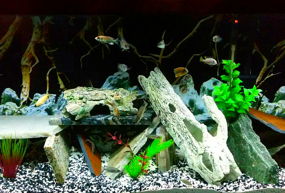 fresh water aquarium