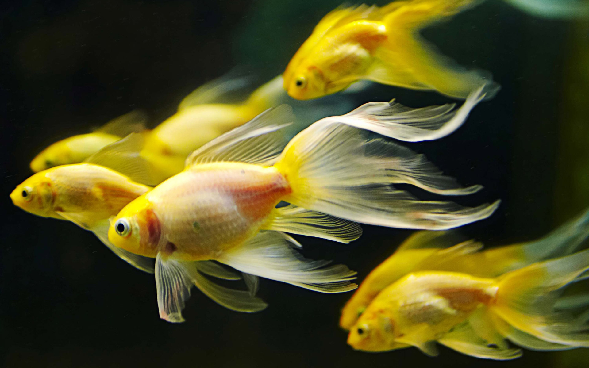 How to Pick and Care for Pet Fish WishForPets