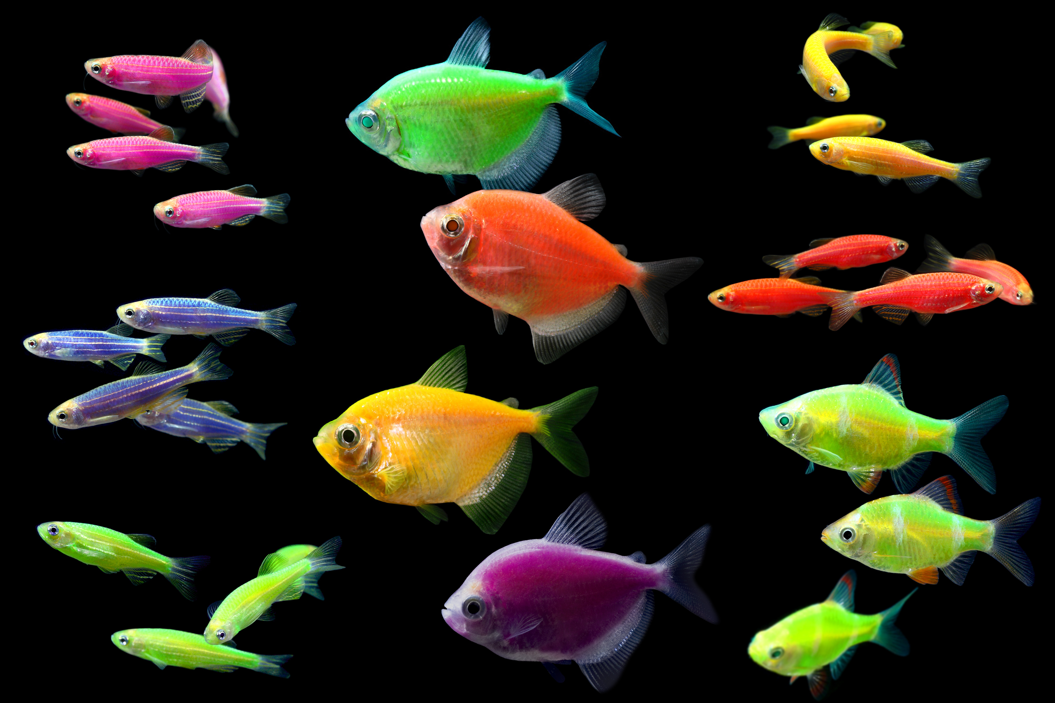 How to pick and care for pet fish wishforpets for Small fish pictures