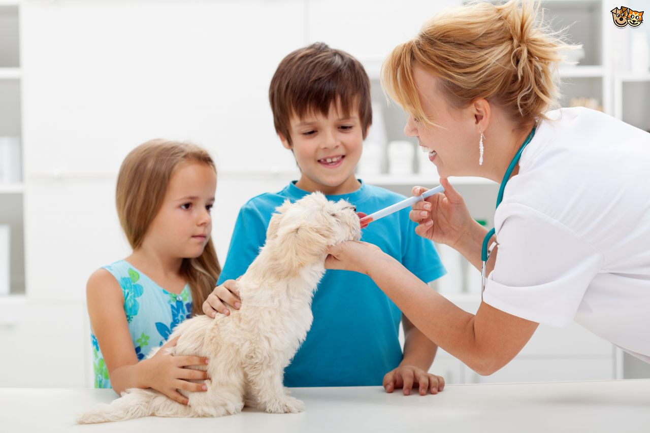 pet medication method
