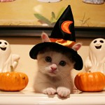 cat Halloween safety