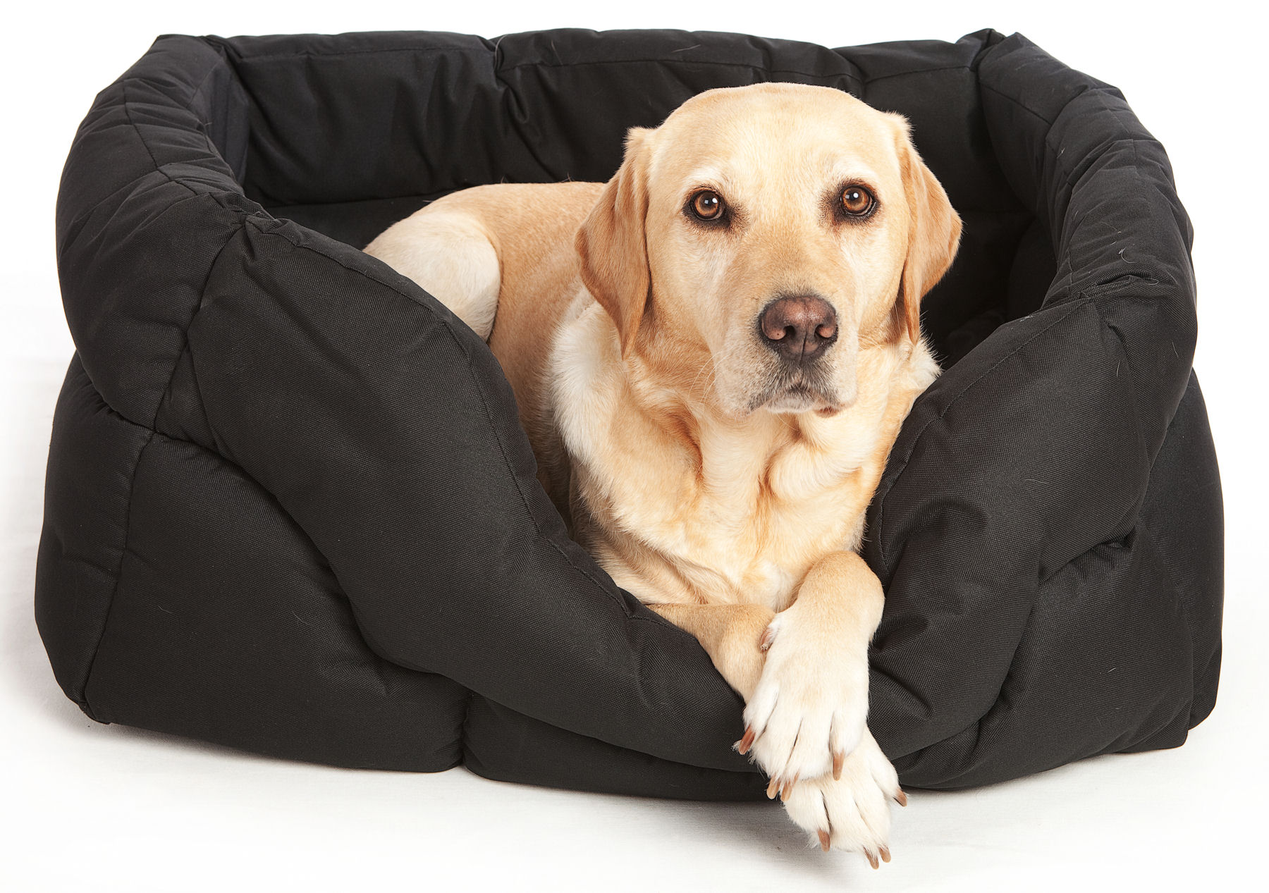 Are Memory Foam Beds Good For Dogs