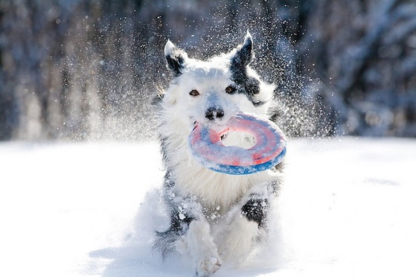winter dog care