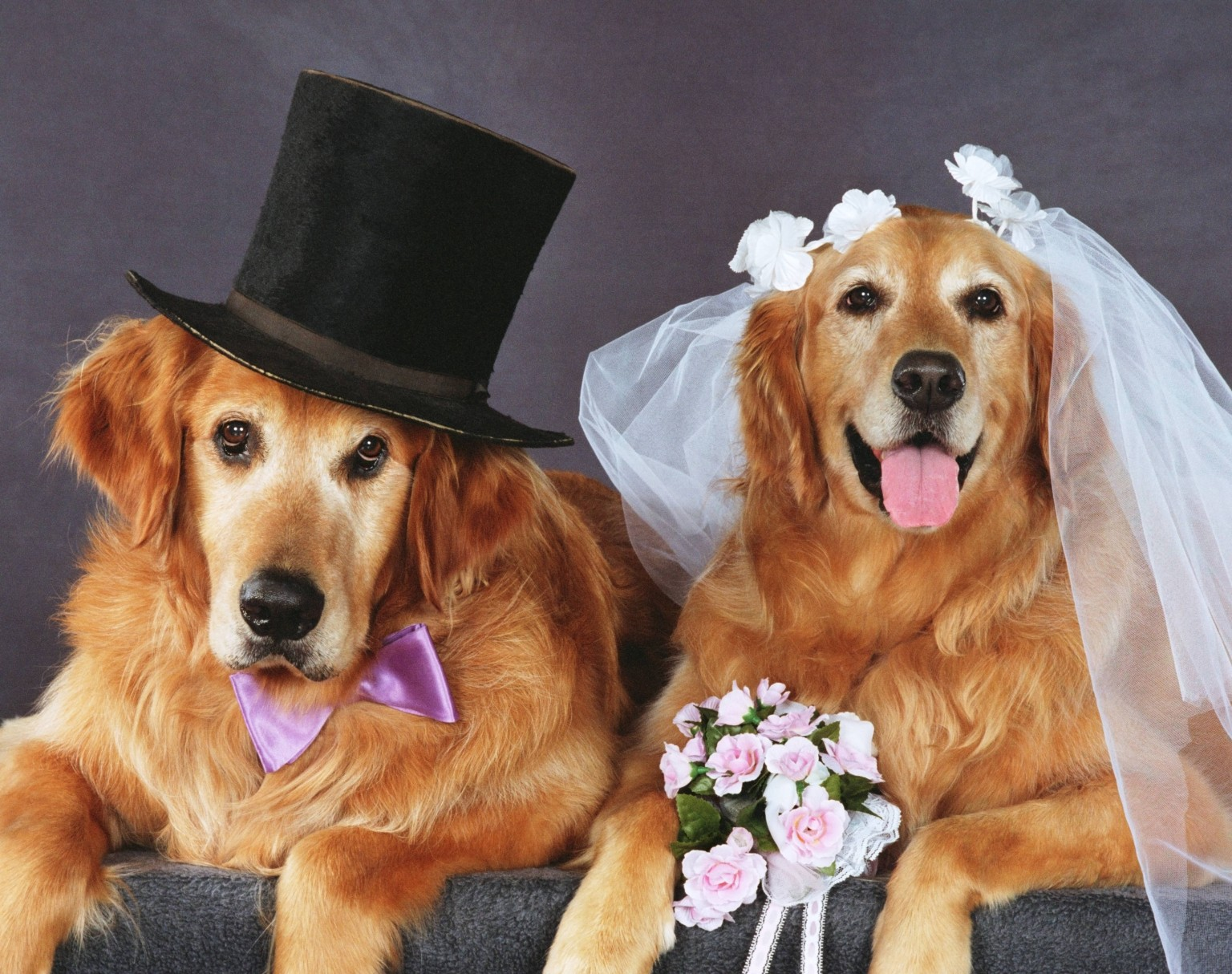 How to Arrange a Wedding Party for Your Pet | WishForPets