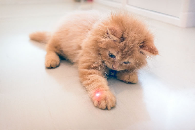 laser pointer for cats
