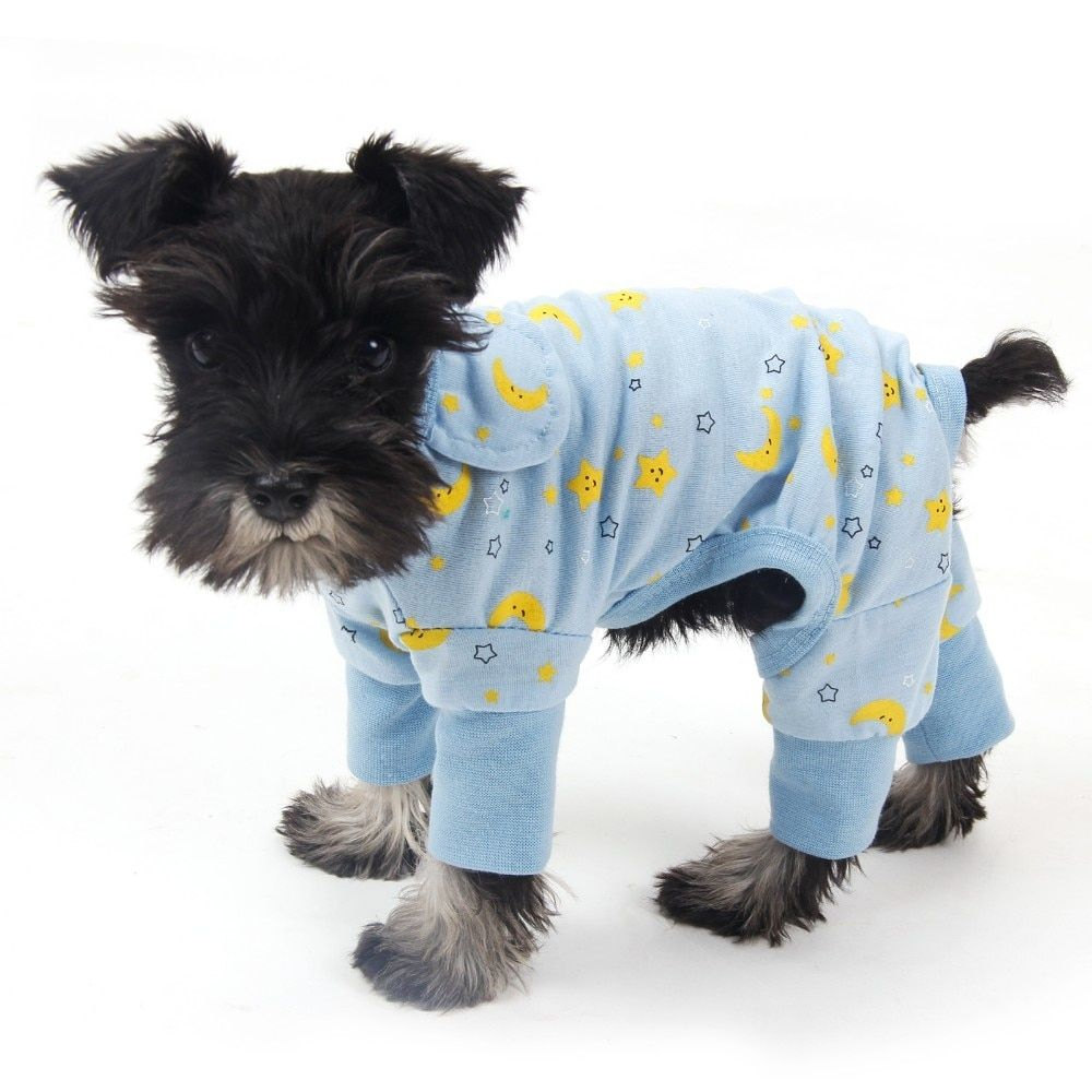 Is it Cruel to Make Dogs Wear Clothes