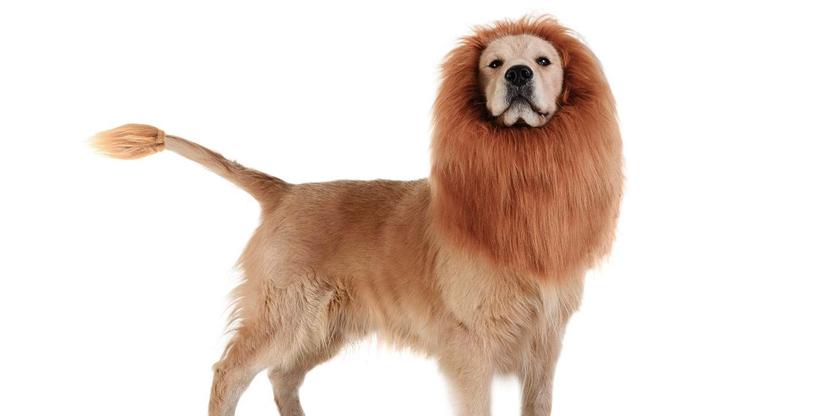 Dog Halloween Costume Ideas for Your Pet in 2021